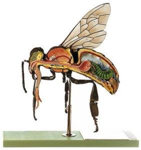 Modelo de abeja obrera